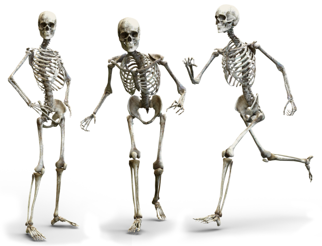 skeleton-3342754_1920