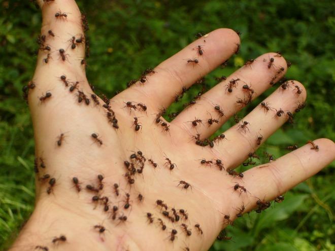 ants-4239_1280