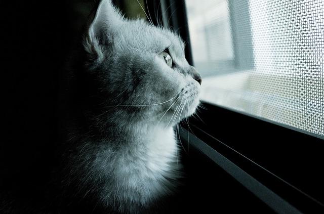 cat-571105_640
